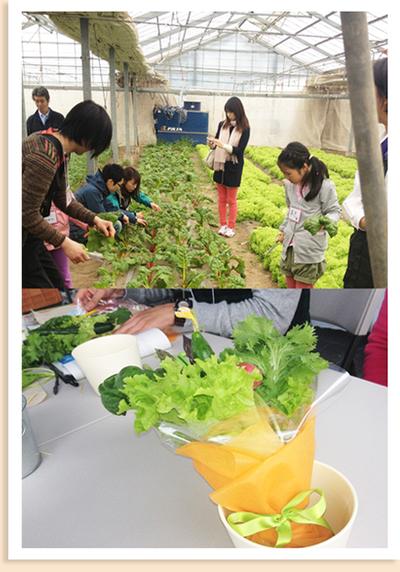 群馬県 前橋市の長谷川農園にて、野菜の収穫とブーケづくりを体験しました。
