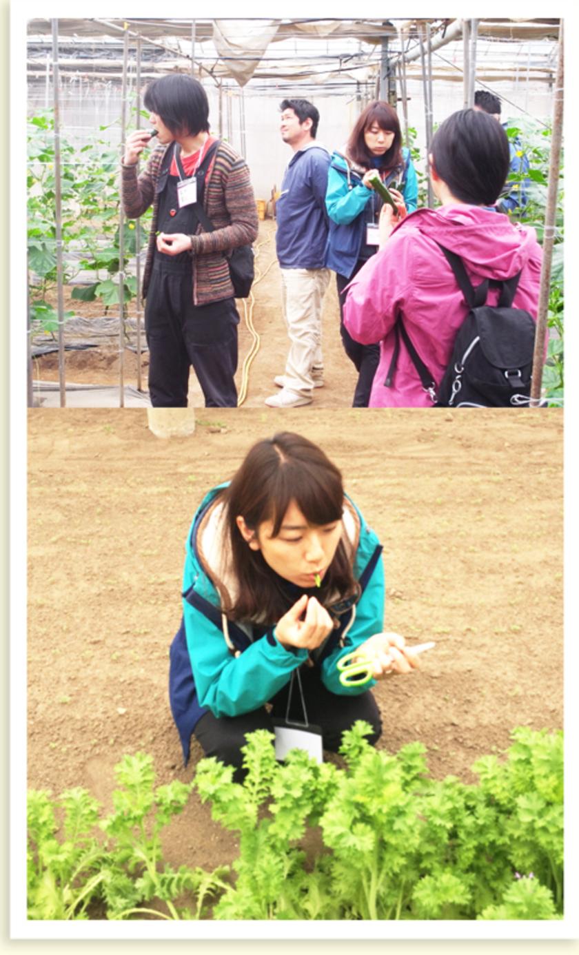 収穫した野菜はその場で試食。何もつけなくても、とってもおいしいんです!この後お昼ごはんなので、食べ過ぎないようにしてくださいね(笑)